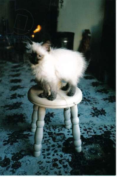 Ice kitten's sister, 2006, (photograph)