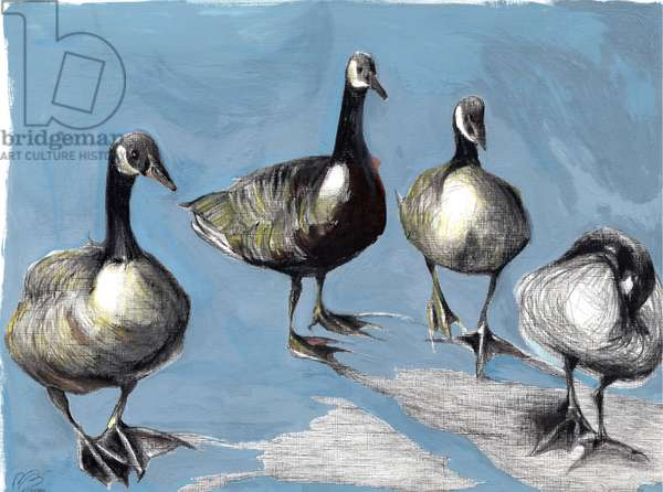 Friendly Canada Geese, 2012, (gouache and charcoal on paper)