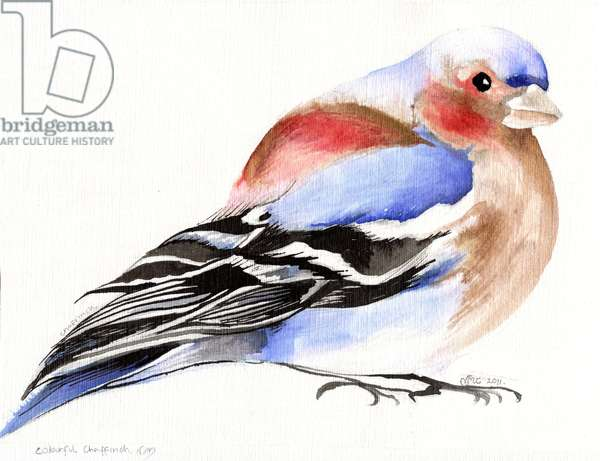 Colourful Chaffinch, 2011, (ink on paper)