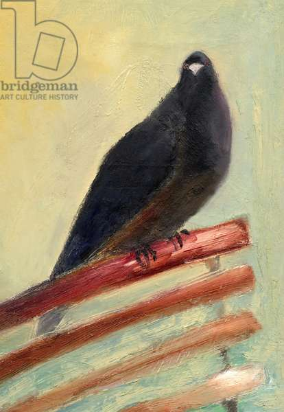 Kingly Court Pigeon, 2013, (oil on canvas)