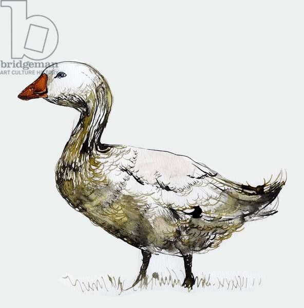 Filthy Goose, 2017 (ink on paper)