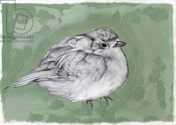Plump Little Robin, 2012, (gouache, pencil on paper)