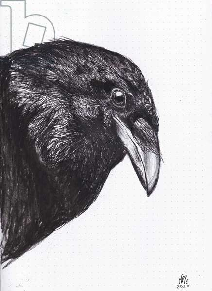 Crow or Raven, 2020, (ink and charcoal on paper)