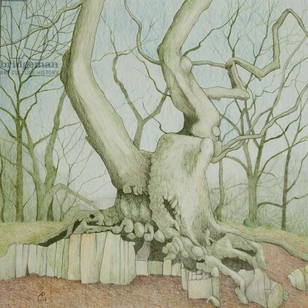Swithland Oak, 2014 (mixed media on paper)