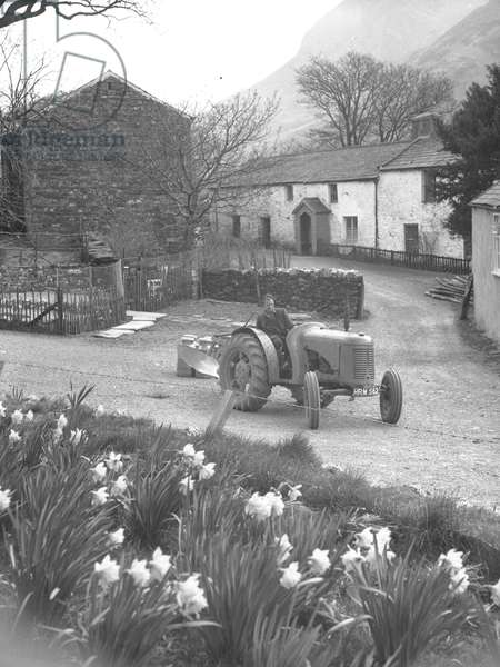 In the foreground are daffodils and a farmer driving a tractor and plough, in the background are buildings and fells, 1930s-60s (b/w photo)