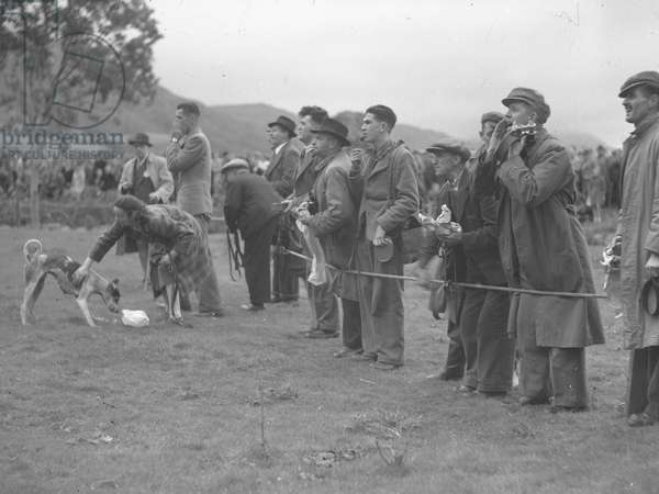 A view of a group of what appear to be dog owners encouraging their dogs on, 1930s-60s (b/w photo)
