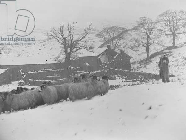 A view of a shepherd in a field with sheep, building in the background, there is a heavy covering of snow, 1930s-60s (b/w photo)