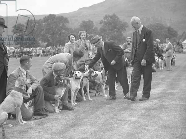 A view of hounds and their owners in a line, whilst two gentlemen inspect the dogs, 1930s-60s (b/w photo)