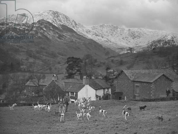 A man walks with a pack of hunting hounds through a field, in the background are buildings and snow capped fells, 1930s-60s (b/w photo)