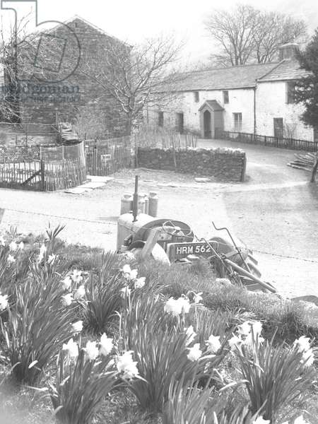 A view of a village, in the foreground are daffodils and a tractor and in the background buildings, 1930s-60s (b/w photo)