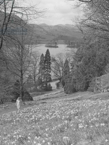 A view of a small girl looking at daffodils on a hillside, in the background is a lake, farmland and fells, 1930s-60s (b/w photo)
