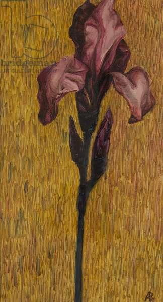 Iris, 2006 (oil on paper)