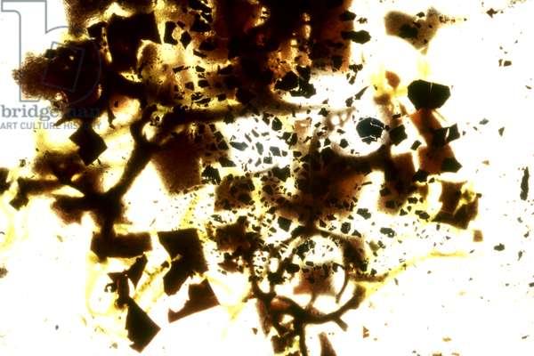 NA_49 [Florence], (2003), print