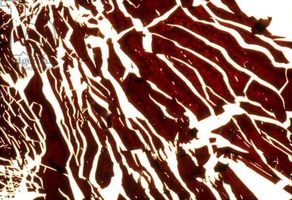 NA_67 [Zebra], (2004), print