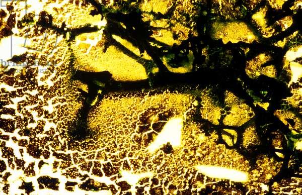 NA_39 [Exhume], 2003, print