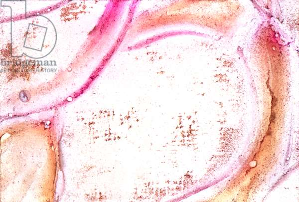 NA_30 [Rose Detail], (2002), print
