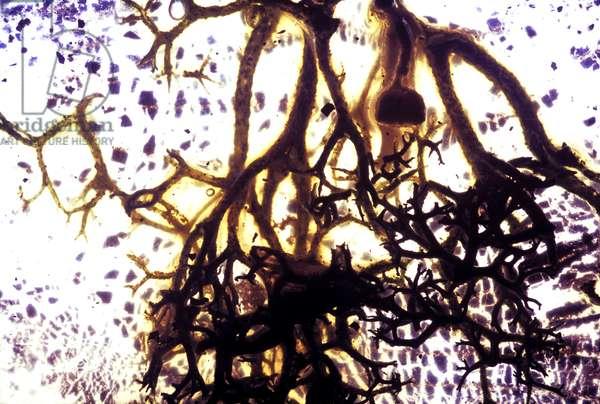 NA_35 [Always Ready To Go], (2003), print
