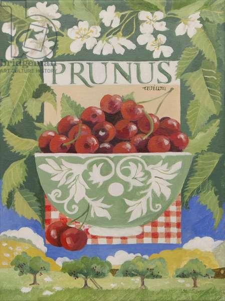 Prunus avium (acrylic)