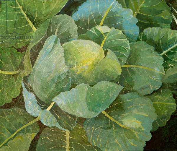 Cabbage (blue), 2014, (acrylic on canvas)