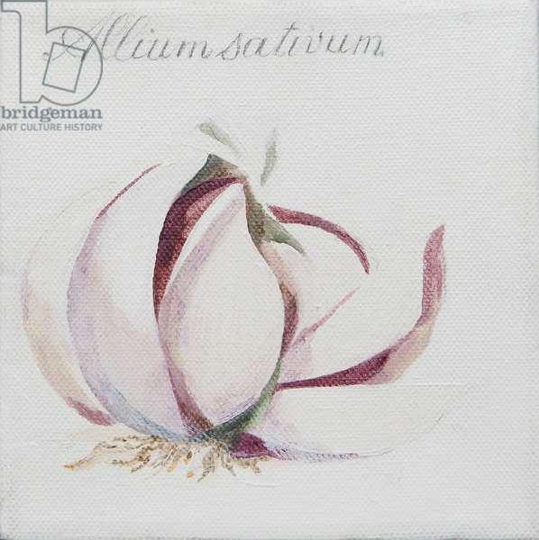 Garlic Cloves (acrylic)