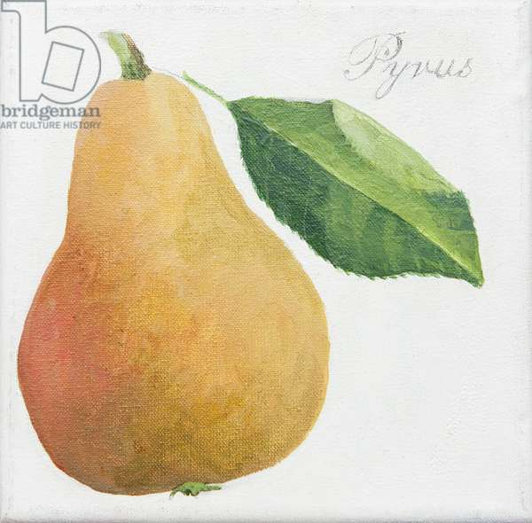 Pyrus, pear (acrylic)