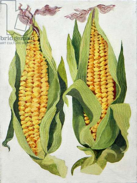 Sweetcorn, 2013, (acrylic on canvas)