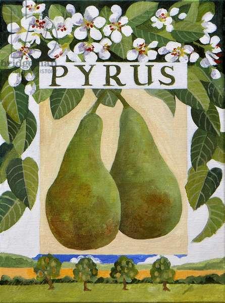 Pyrus (pear), 2014, (acrylic on canvas)