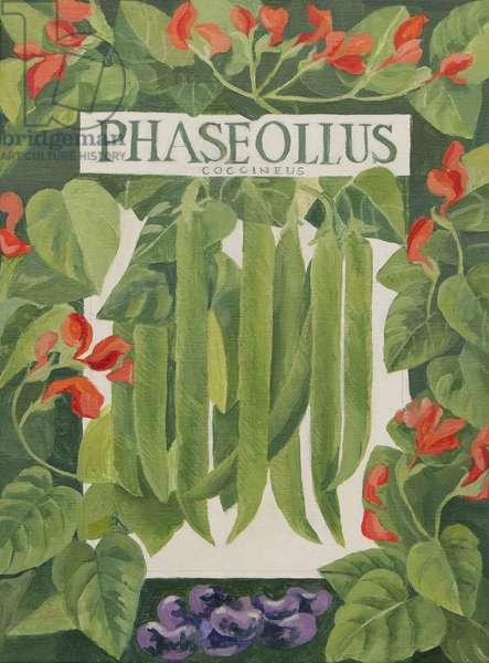 Phaseollus (runner beans) (acrylic)