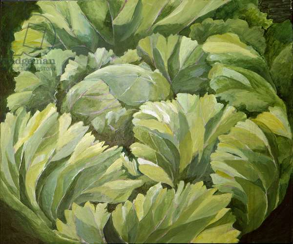 Cabbage, 2013, (acrylic on canvas)