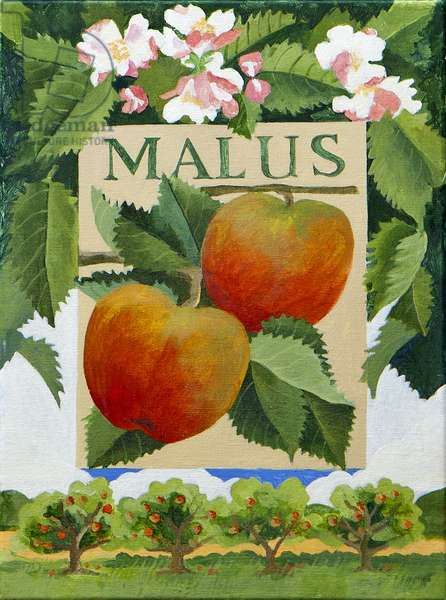 Malus (apple), 2014, (acrylic on canvas)