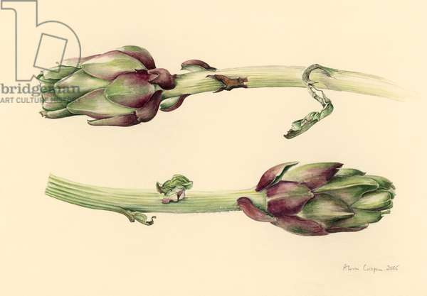 Artichokes, 2005 (w/c on paper)
