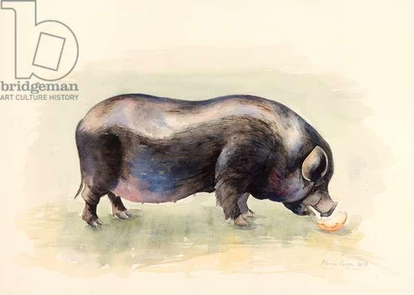 Italian Black  Pig , 2014, watercolour