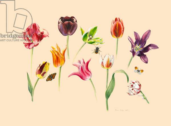 spring tulips and insects