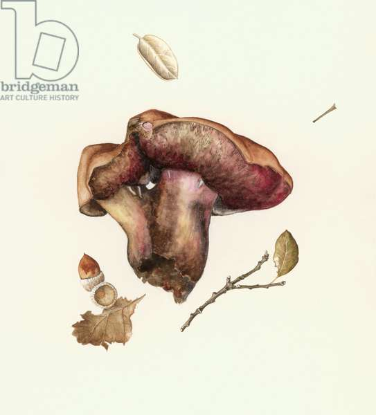 Fungus (w/c on paper)