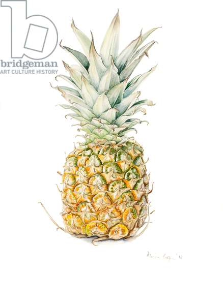Ripe Pineapple, watercolour, 2016