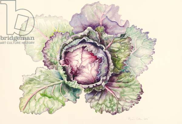Cabbage from the market, 2015, watercolour
