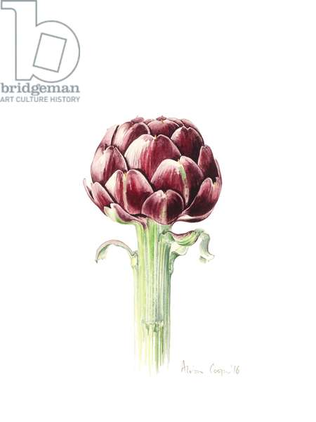 Artichoke from Roman market, 2016, watercolour