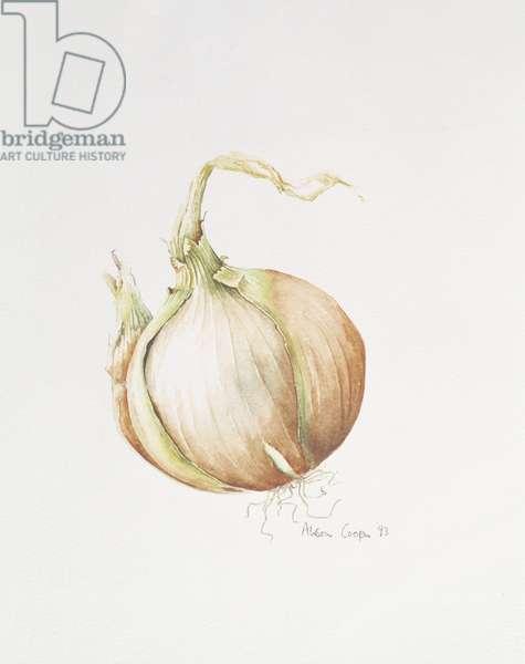 Onion Study, 1993 (w/c)