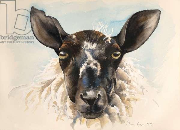 Hello Ewe