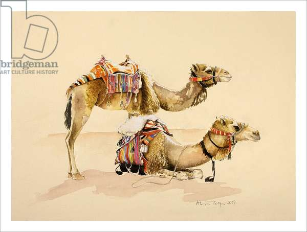Camels from Petra, 2007 (w/c on paper)