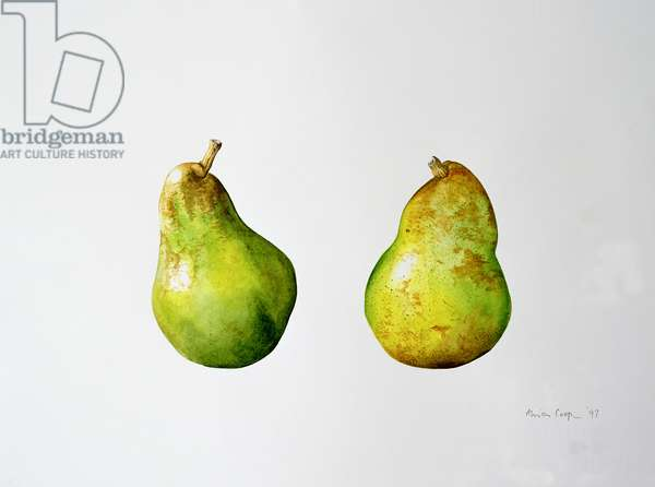 A Pair of Pears, 1997 (w/c on paper)