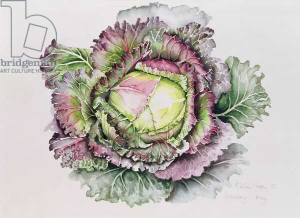 January King Cabbage (w/c)