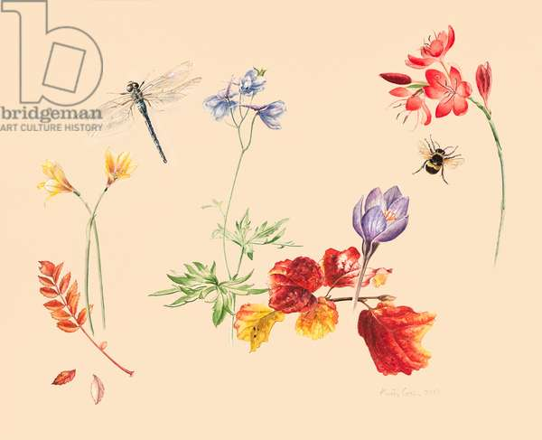 Autumn Flowers and insects