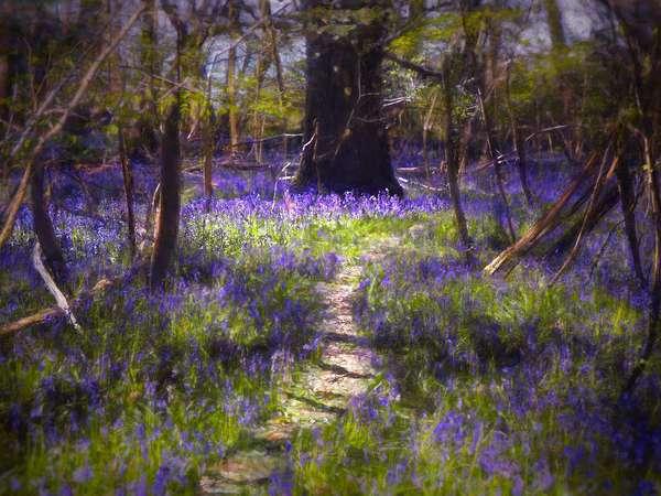 Light-Dappled Bluebells, 2021 (digital painting)