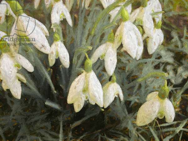 Snowdrops, 2019, (painting)
