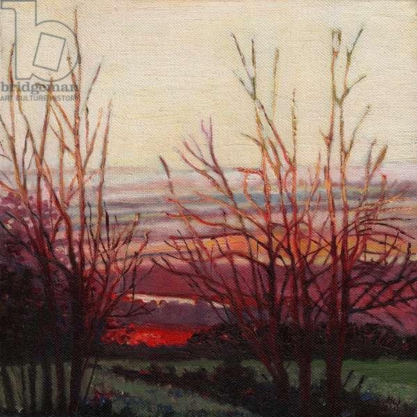 Winter's light, 2012 (oil on canvas)