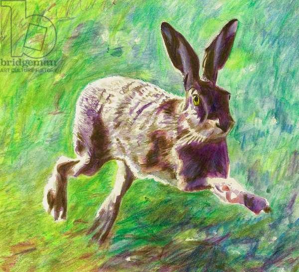 Joyful hare, 2011, (coloured pencil on paper)