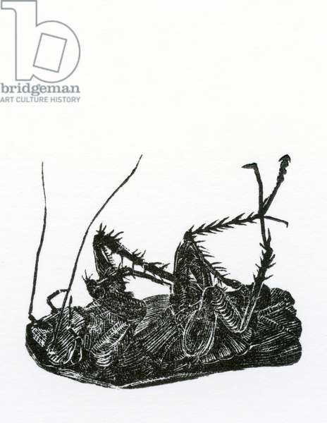 Dead Cockroach, 2014, (wood engraving on paper)