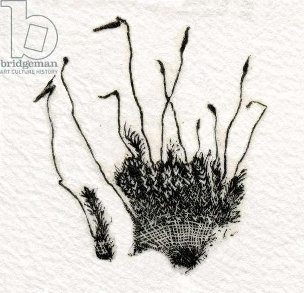 Budding Moss, 2014, (wood engraving on gampi)