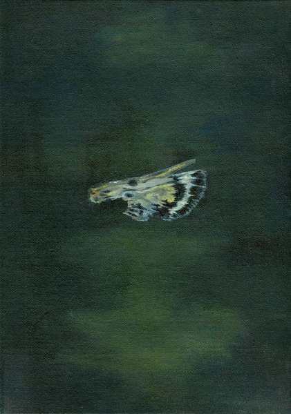 Moth Wing, 2014, (oil on canvas)